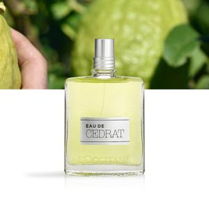 L'OCCITANE Eau de Toilette Cédrat flacon 75ml